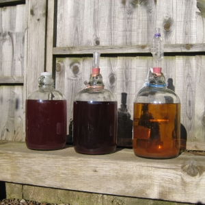 three demijohns of wine in the sunshine