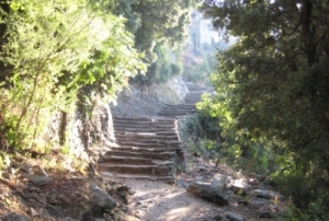 Sunlit stone staircase rising through trees into the distance