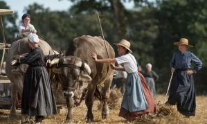 women at harvest with an ox-drawn cart