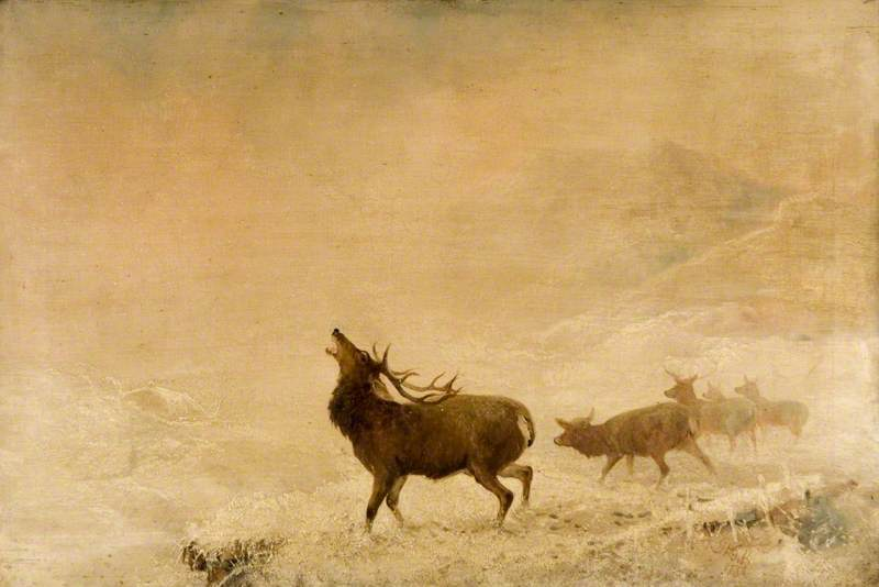 red deer stag with raised head and antlers in mist